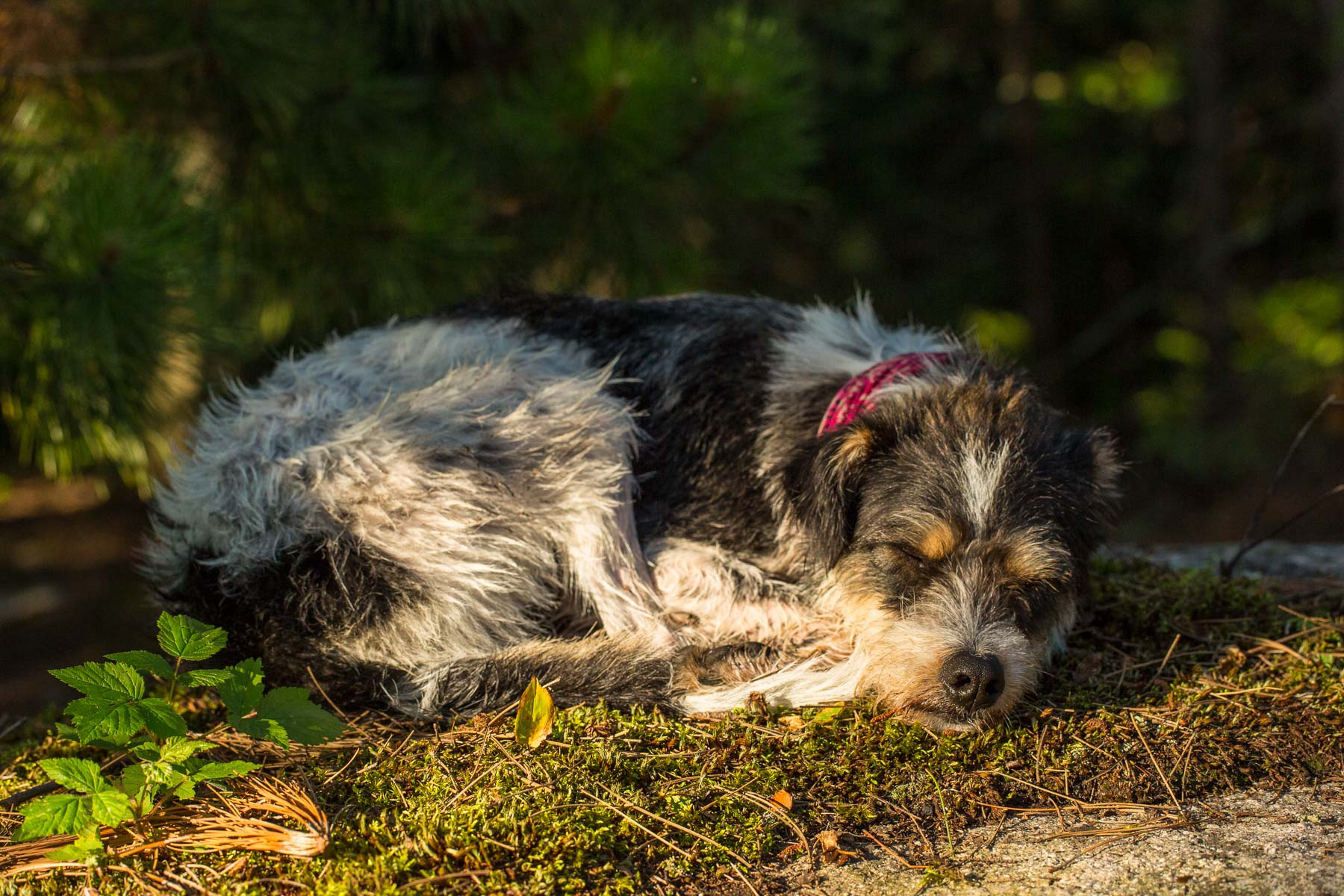 Boundary Waters Dog Photos -4