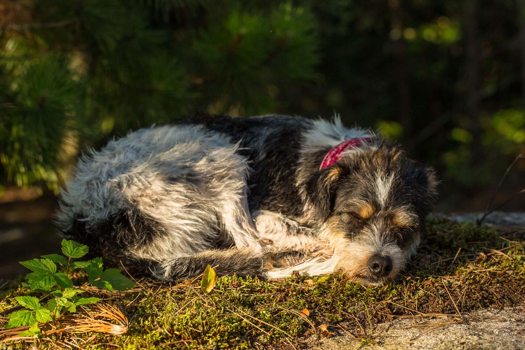 Boundary Waters Dog Photos -4